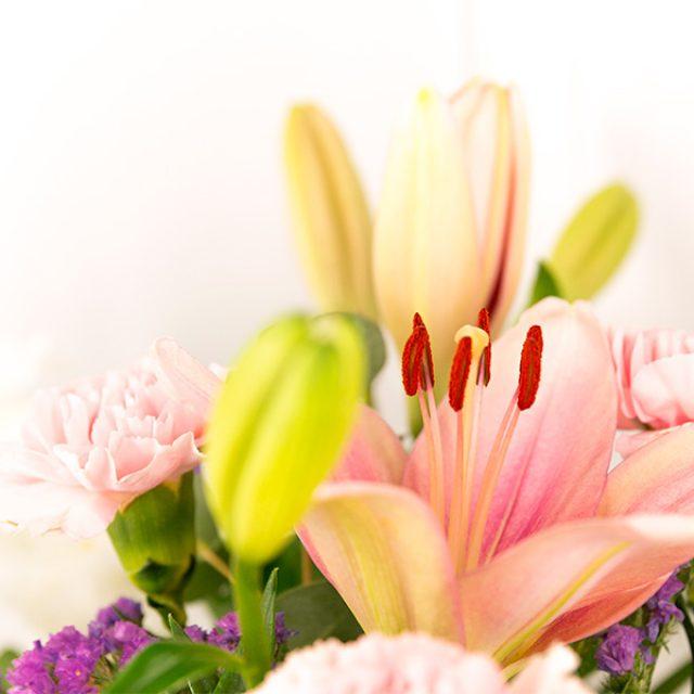 Flors – Flores – Flowers